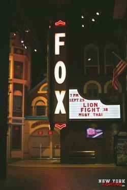 NYF_Lions Fight